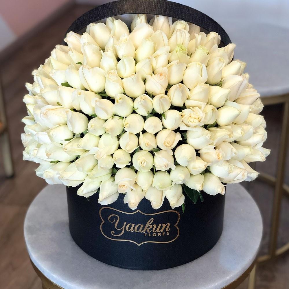 150 rosas en caja redonda especial blancas