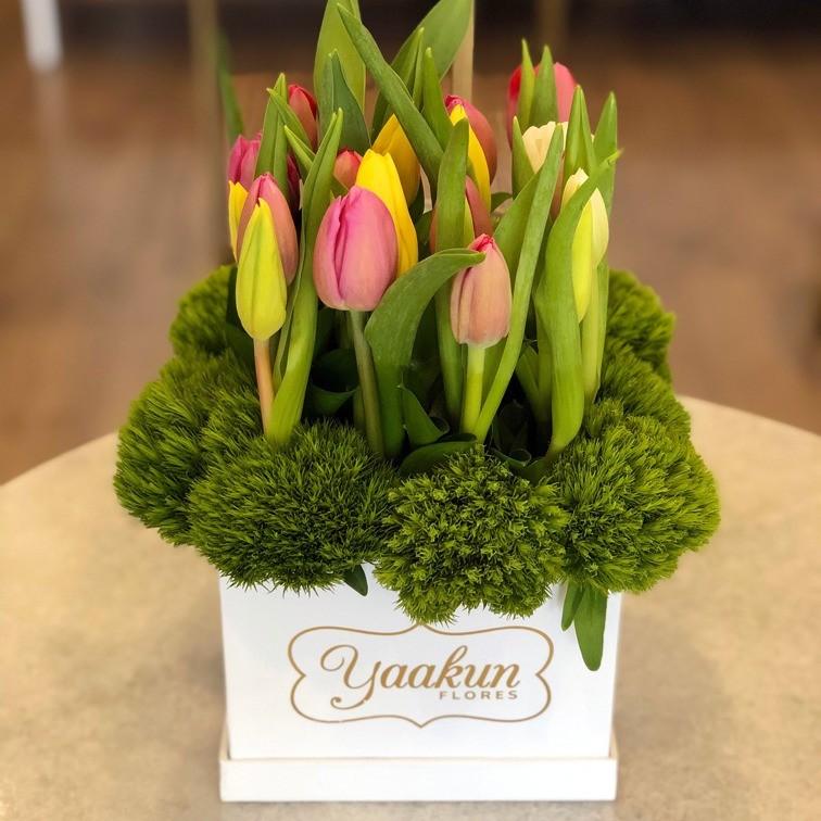 20 tulipanes en caja yaakun jardín especial