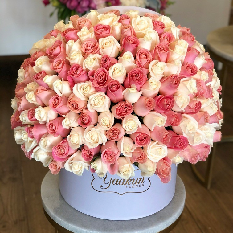 200 rosas en caja redonda duo color
