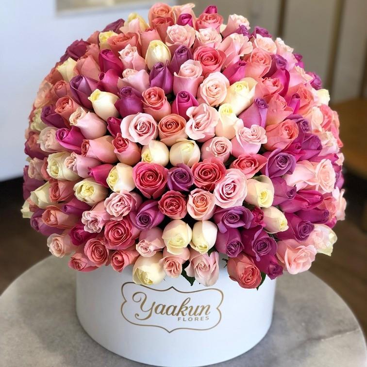 200 rosas en caja redonda especial 4 colores