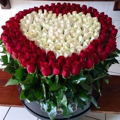 300 rosas en caja redonda altas maxi negra, bello amor blanco