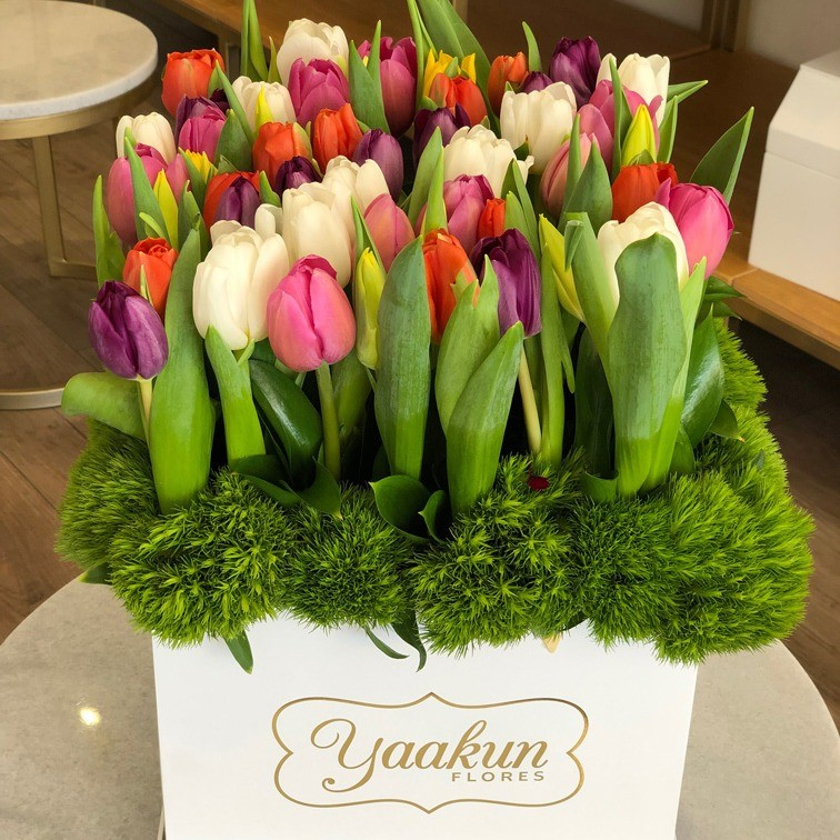 50 tulipanes en caja blanca yaakun tulipanes