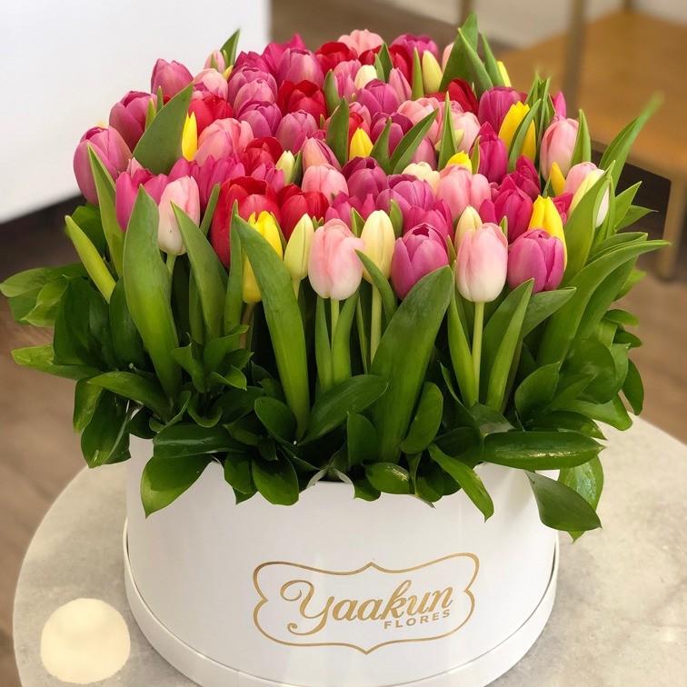 70 tulipanes en caja redonda yaakun