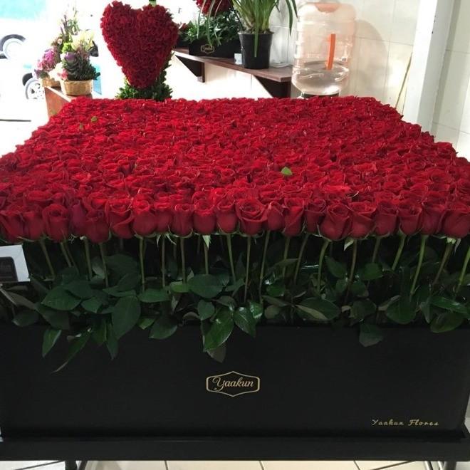 800 rosas en caja gigante mega yaakun jardín rojo