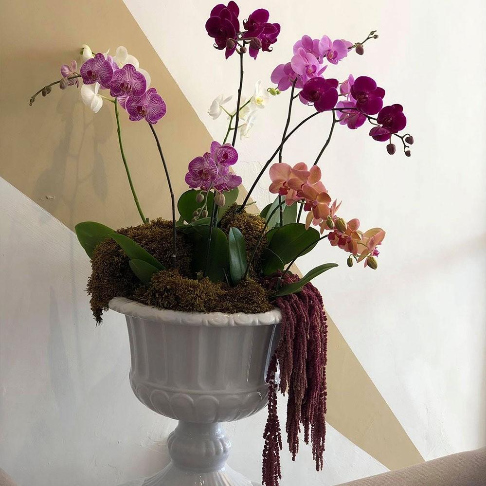 Copa romana con orquídeas phalaenopsis