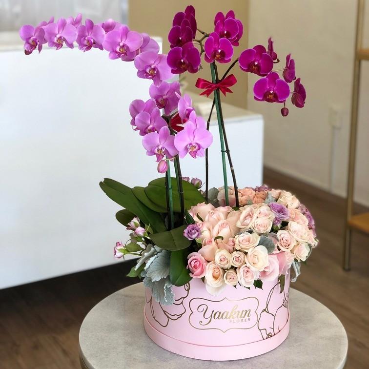 Orquídeas en caja circular rosa edición especial yaakun