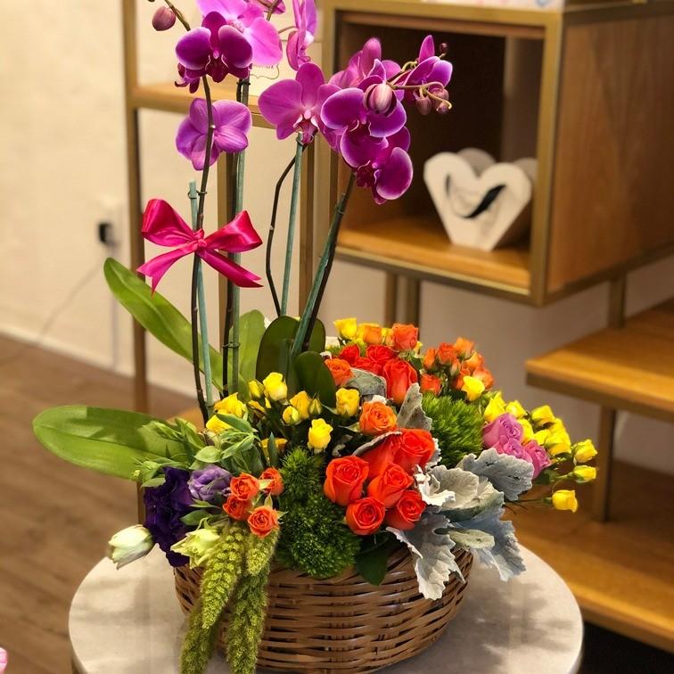 Orquídeas en canasta mimbre