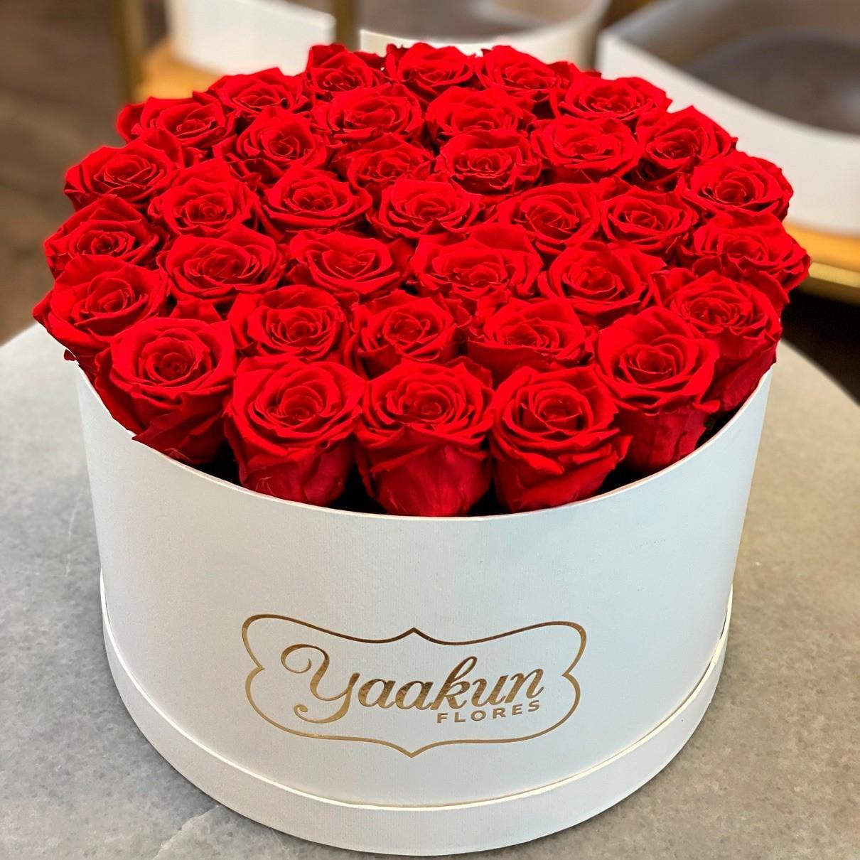 Rosas eternas en caja blanca circular rosas rojas