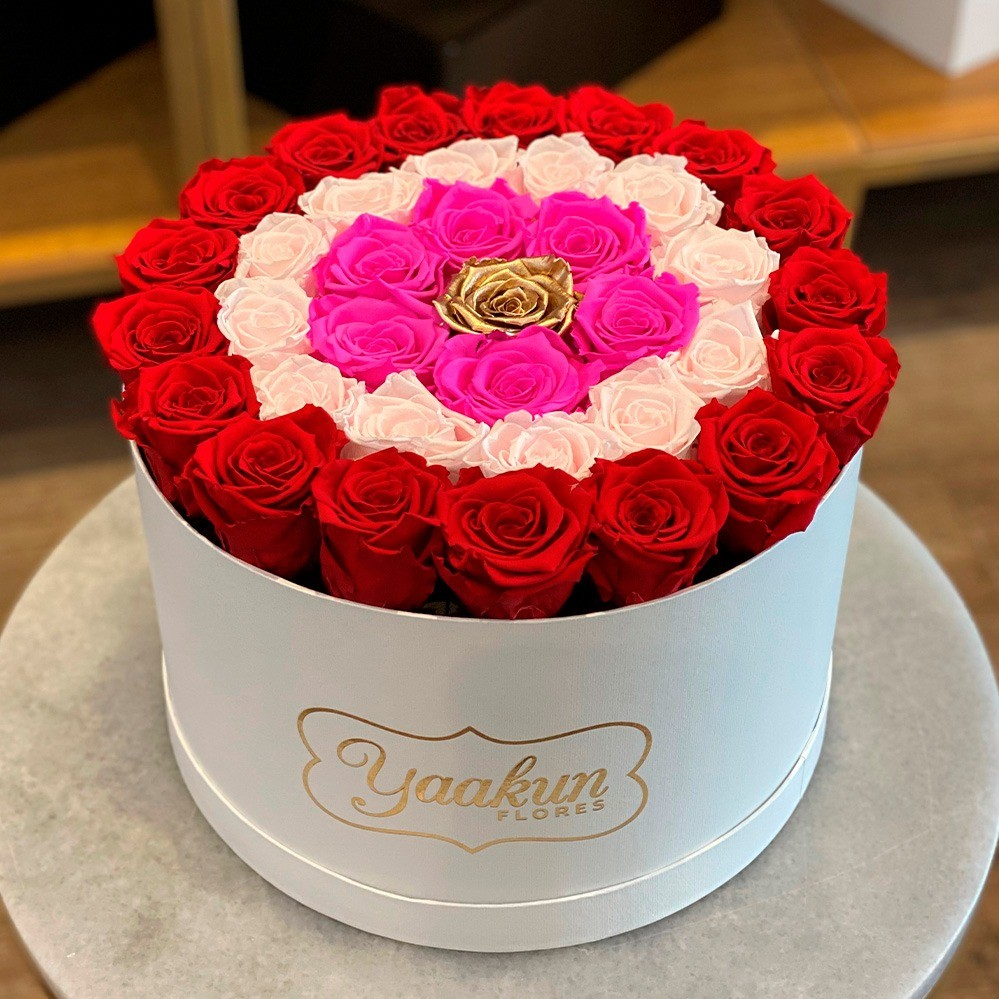 Rosas eternas en caja circular red, pink, fuchsia and gold